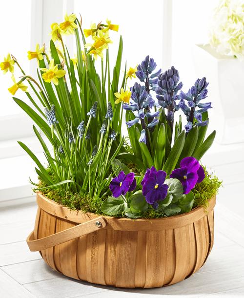 FTD Spring Blooms Bulb Basket - Deluxe
