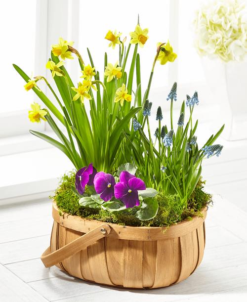 FTD Spring Blooms Bulb Basket